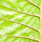 Patterns of a Tropical Leaf by jayneeldred
