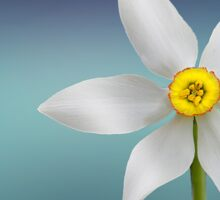 Very Elegant Daffodil Theme Sticker