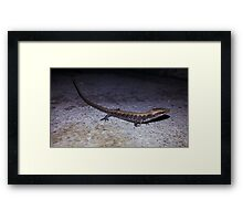 Lost Lizard Framed Print
