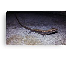 Lost Lizard Canvas Print
