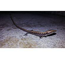 Lost Lizard Photographic Print
