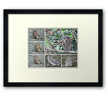 Tawny Frogmouth collage Framed Print