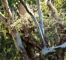 Natures Best Arrangements  by Lozzar Landscape