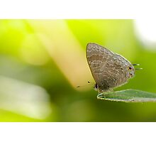 Hairy Lined Blue Photographic Print