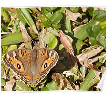 Meadow Argus Butterfly - Patterns Poster