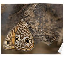 Ringed Xenica Butterfly Poster