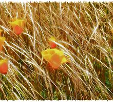 Poppies in a Field of Grasses by Heike Richter
