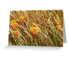 Poppies in a Field of Grasses Greeting Card