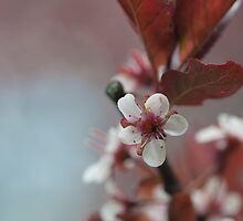 Blossom 10 by Gary Chapple