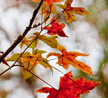 Splashes of Autumn by Lisa G. Putman