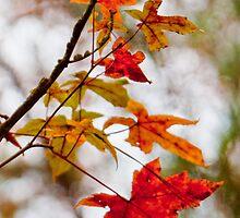 Splashes of Autumn by Lisa G. Putman