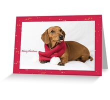 Pepper's Christmas #1 Greeting Card