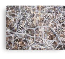 Frozen Branches Lovely Theme Canvas Print