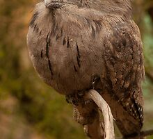 Tawny Frogmouth by Danielle  Miner
