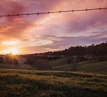 Fences & Freedom by Victoria Nelson