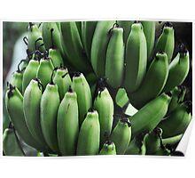 bunch of green bananas Poster