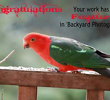 Banner Entry for 'Backyard Photography' by Vicki Childs