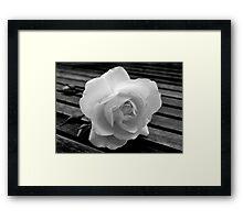 Solitary Rose. Framed Print