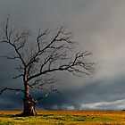 Gothic tree by Barry Feldman