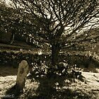 Fairy Tree and Low November Sunlight, Glens of Antrim by Laura Butler