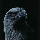 Eagle by conspire28