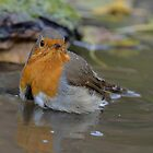 Robin - I by Peter Wiggerman