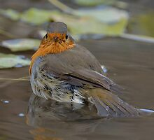Robin - III by Peter Wiggerman