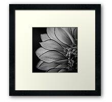 Flowerscapes - BW Dahlia Polka Framed Print