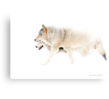 Le chant du Loup - Hunting in the mist Canvas Print