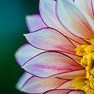 Flowerscapes - Dahlia Polka by lesslinear