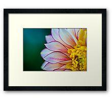 Flowerscapes - Dahlia Polka Framed Print