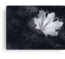 The Leaf, by Darren Richards Canvas Print