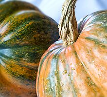 Acorn and Nugget Squash by Mariola Szeliga