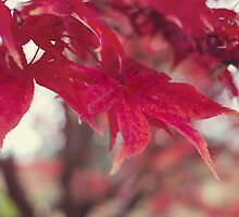 Fire Red Leaves by dbrender