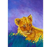 African Lion Cub Photographic Print