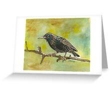 Starling Greeting Card