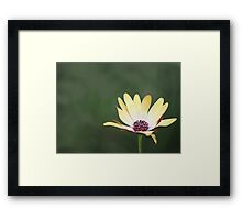 He Loves Me, He Loves Me Not Framed Print
