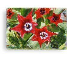 Xmas Tulips Canvas Print