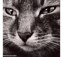 My Little Gracie, by Robert Lancaster Photographic Print