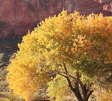 Canyon Oak in Yellow Autumn Foliage by Roupen  Baker