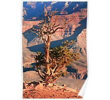 Weatherd old Juniper Tree on the Canyon Rim Poster
