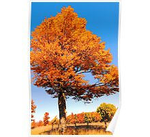 Just a glorious fall day in autumn.. Poster