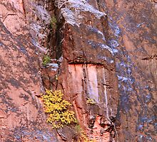Canyon Wall by Roupen  Baker