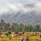 Fields and Mist in Banyuatis by jayneeldred