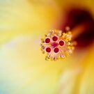 Flowerscapes - Hibiscus Detail by lesslinear