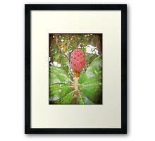 After the Flower Framed Print