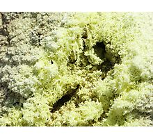 Sulfur crystals Photographic Print