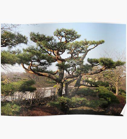 Evergreen Tree Poster