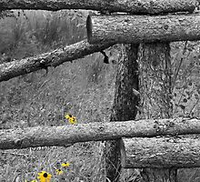 Yellow Flowers in Black and White World by Denise Cordner