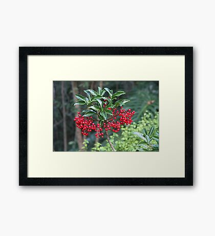 Christmas Colours for December Framed Print